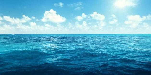 초록 입 홍합 VS 크릴 오일