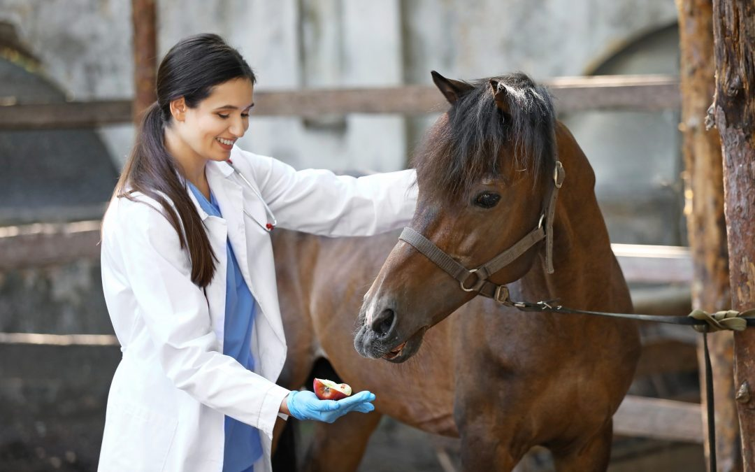 Can you give an Omega-3 fatty acid supplement to horses?