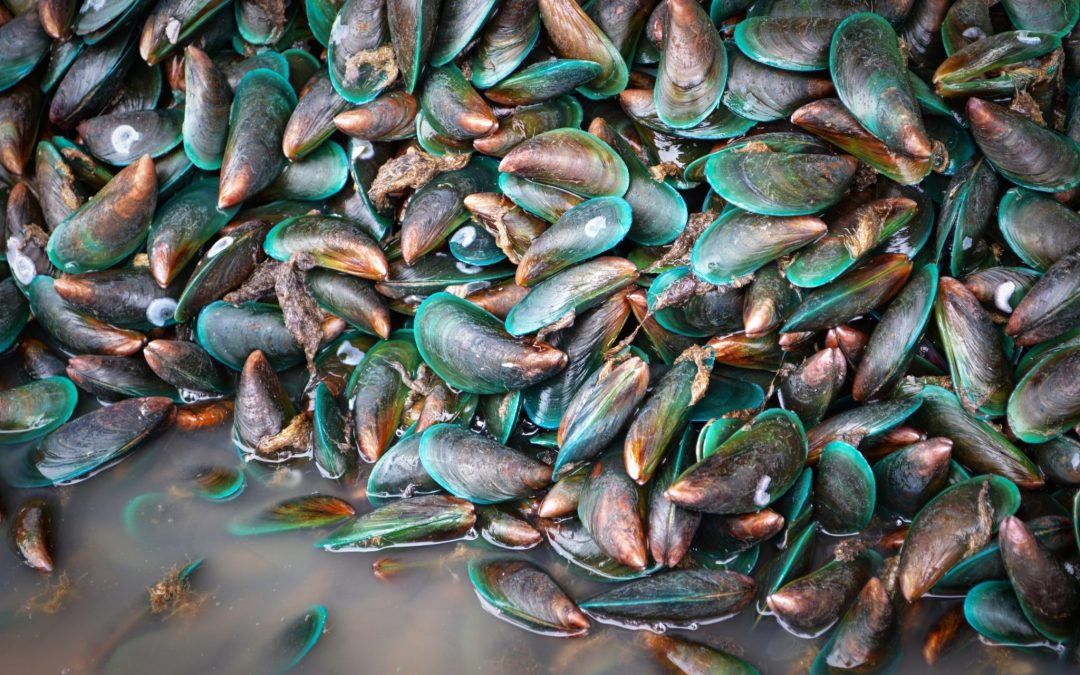 Everything You Need to Know About Green-Lipped Mussel Oil
