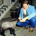 Young Dr. Larry Holler and one of our first homozygous recessive (affected with GM1 gangliosidosis) lambs, named Rosie, resulting in accumulation of large quantities of GM1.