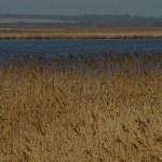 Das Gnitzer Seelchen in mitten der Natur