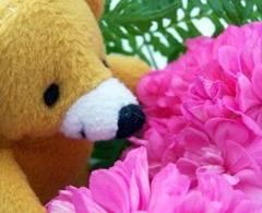 530368_teddy_sniffs