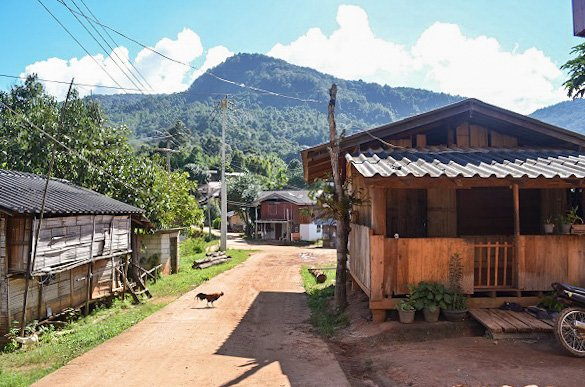 Village rooster