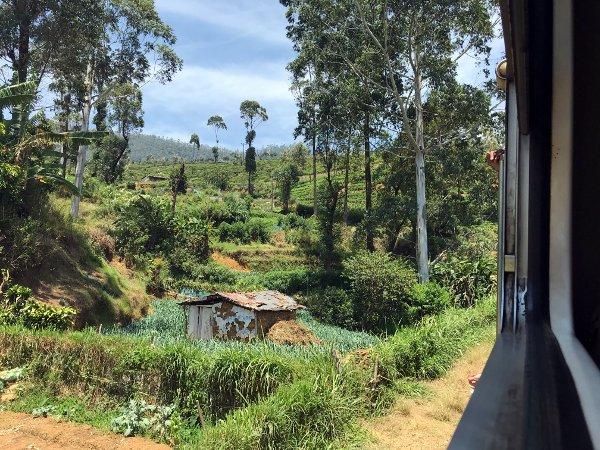 nuwara eliya day trip