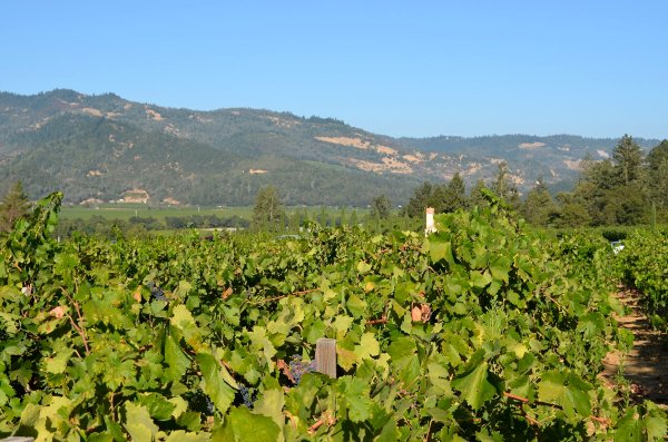 drunk driving tour of napa valley