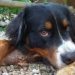 Huisdieren en wij: wat kon er misgaan?