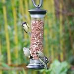 Vogels bijvoeren in de zomer: hoe zit het?