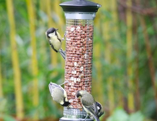 vogels bijvoeren winter zomer