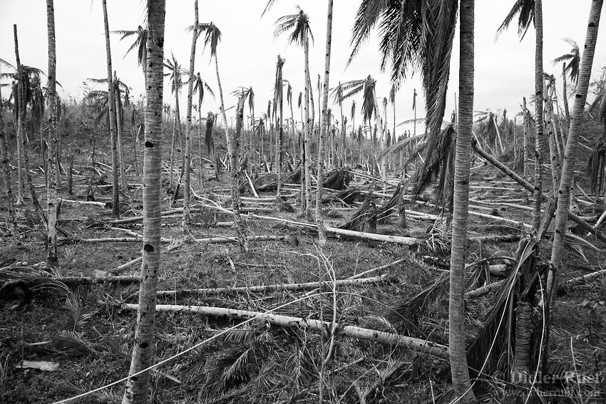 By withdrawing the protection historically enjoyed by the coconut tree against slaughter by land sharks, the government has sounded the death knell of green Goa.