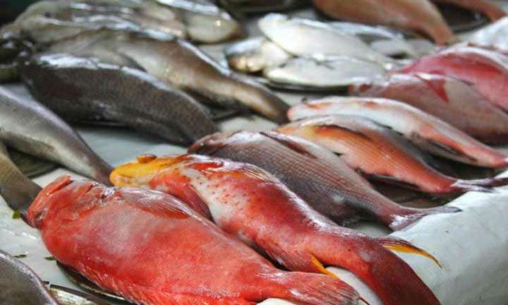Government Claims Formalin is Inherent in Fish, But Marine Biologist Experts Says, It is False!!