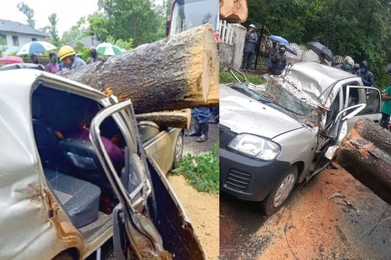 Tree Crashes in Car at Verna