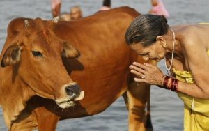 Karnataka Government Is Planning To Put Ban on Cow Slaughtering