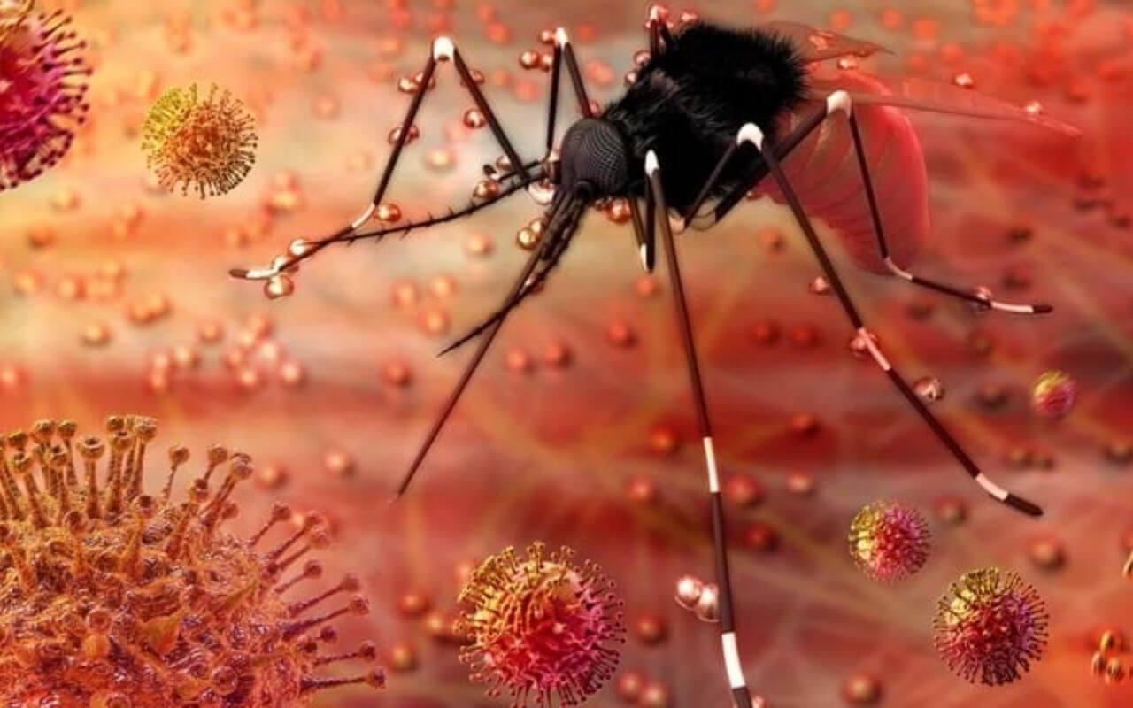 Zika Virus Spread By Mosquitos