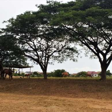 Ghanaian army base where volunteers help with horse care