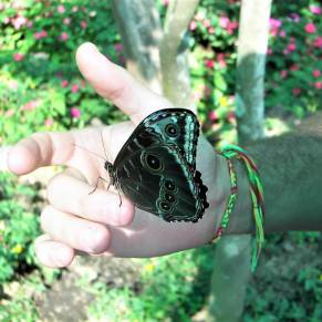 Butterfly on a man's hand in Costa Rica