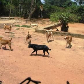 Dogs walking around shelter yard