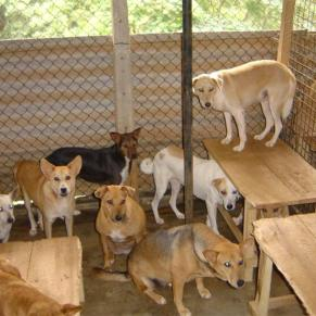 Dogs inside a shelter room, one dog on top of a table