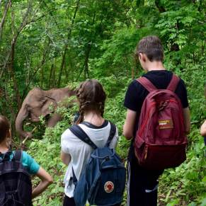 Group observing elephants in the forest
