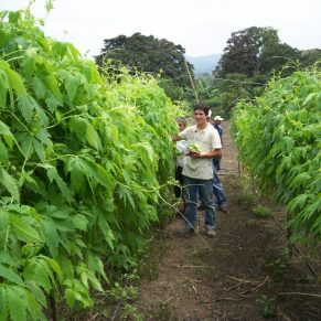Organic farming in Ecuador