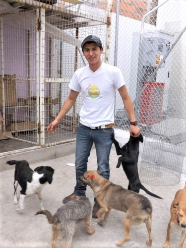 Staff member surrounded by dogs at a rescue center