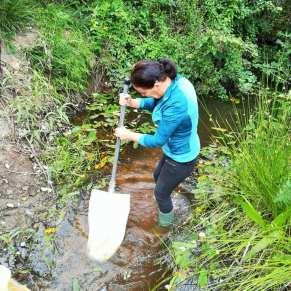 Volunteer standing in a stream