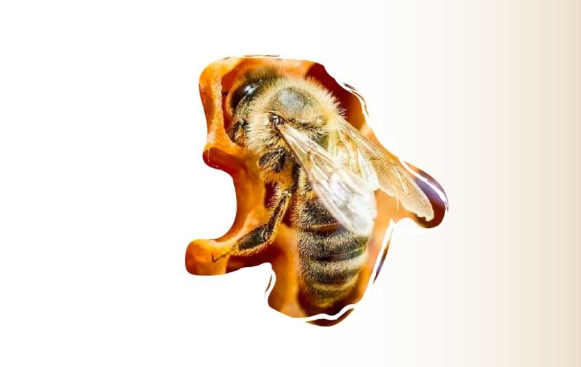 Conservar a las abejas es sinónimo de preservar nuestra biodiversidad y la vida en el planeta.