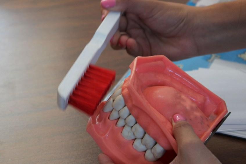 Dentadura con cepillo de dientes.