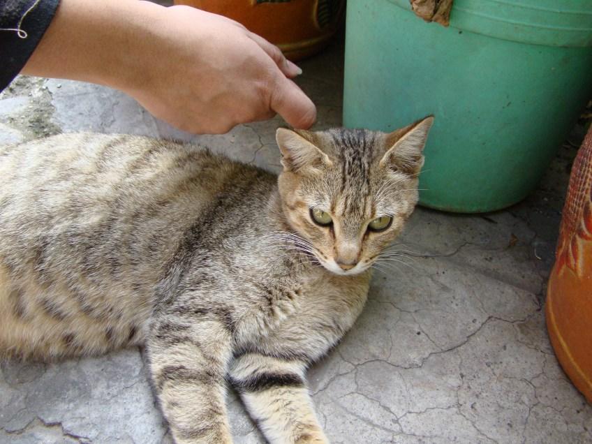 La mano va acariciar al gato.