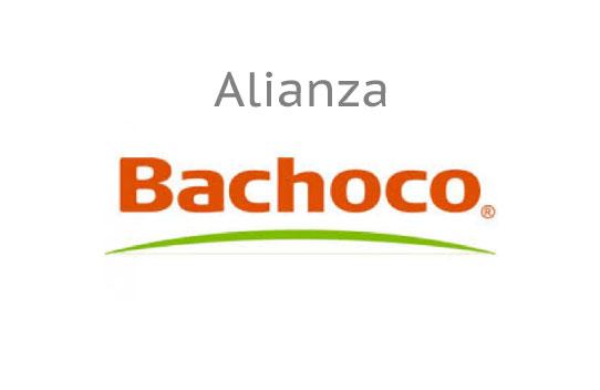 Bachoco | Instituto Nacional para la Educación de los Adultos ...