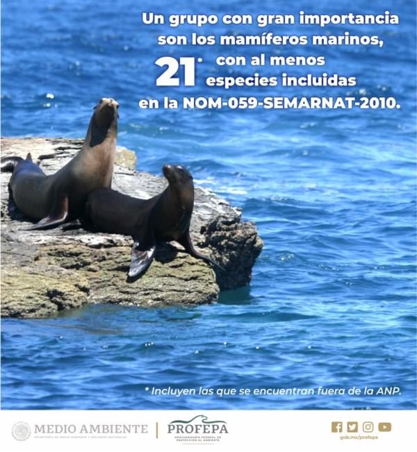 /cms/uploads/image/file/536274/MapaReserva_de_B_Alto_Golfo_Cal.3-2.jpg