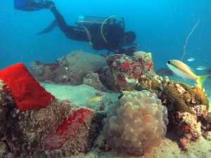 Diving céramique Ming Belitung Indonésie