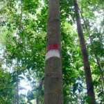 marque Belitung Indonésie Go Belitung