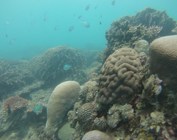 fonds marins Belitung Indonésie Go Belitung