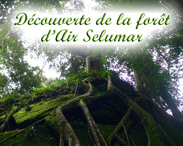Bukit-Peramun GoBelitung Belitung Indonesia