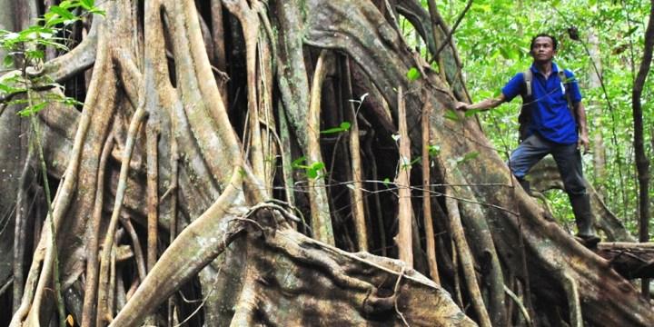 Bukit Peramun Air Selumar Belitung Island Indonesia gobelitung