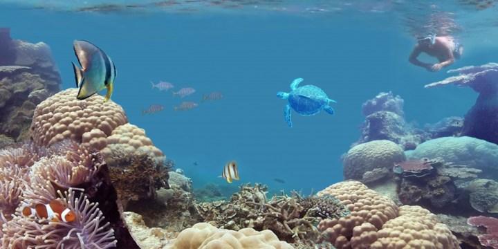 Snorkeling in Belitung Island Indonesia gobelitung