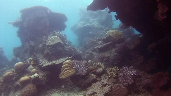 snorkeling in Belitung wtih GoBelitung Indoensia