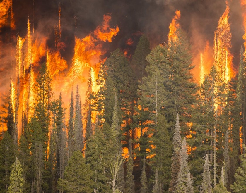 Crown fire in mixed conifer forest, southern Idaho, 2016