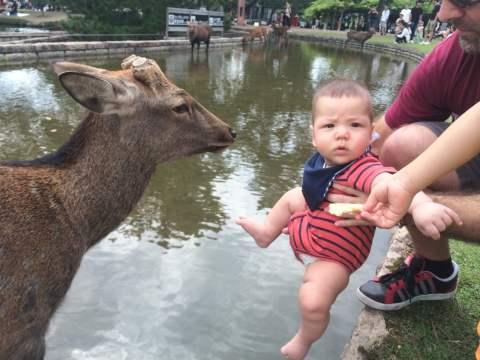 What the.... ? The Deer of Nara, Japan