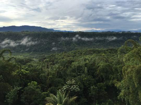 Sunrise Over a Cloud Forest