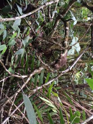 Animal Rescue - We saved this baby's life after he fell out of a tree