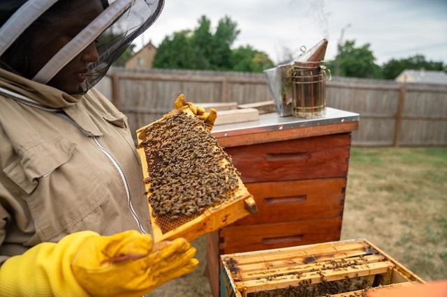 Nicole Lindsey checking on a beehive