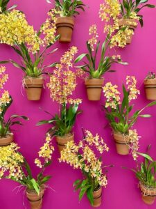 Yellow flowers on a pink wall