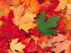 leaf_fall_in_dixie_national_forest_utah