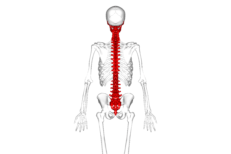 Do you Have a Wish Bone or Back Bone?