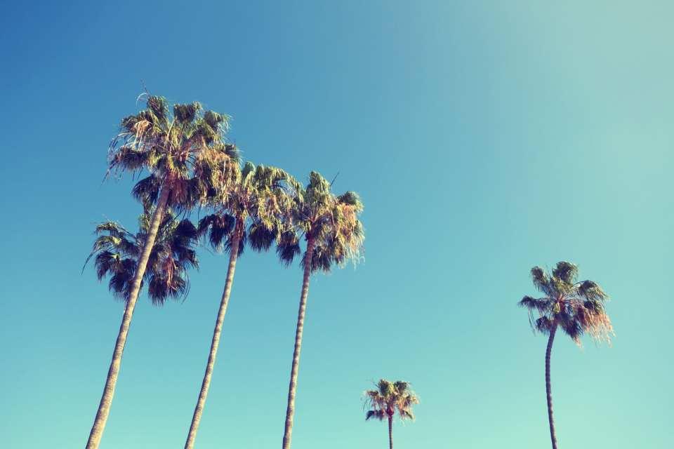palm trees avios