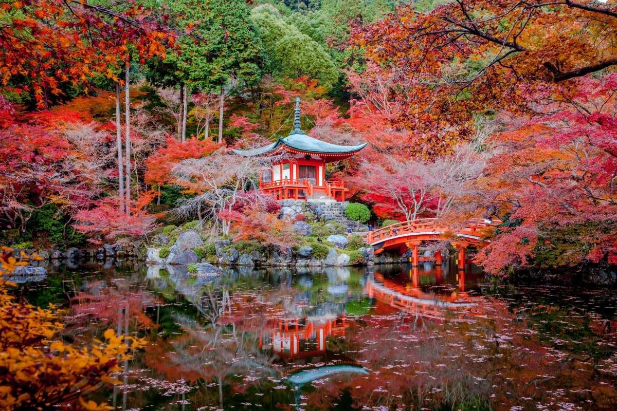 kyoto sakura season
