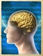 pic brain