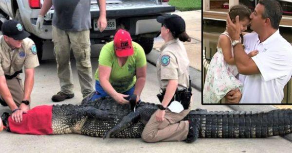 alligatore in texas