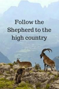 Joshua followed His Shepherd